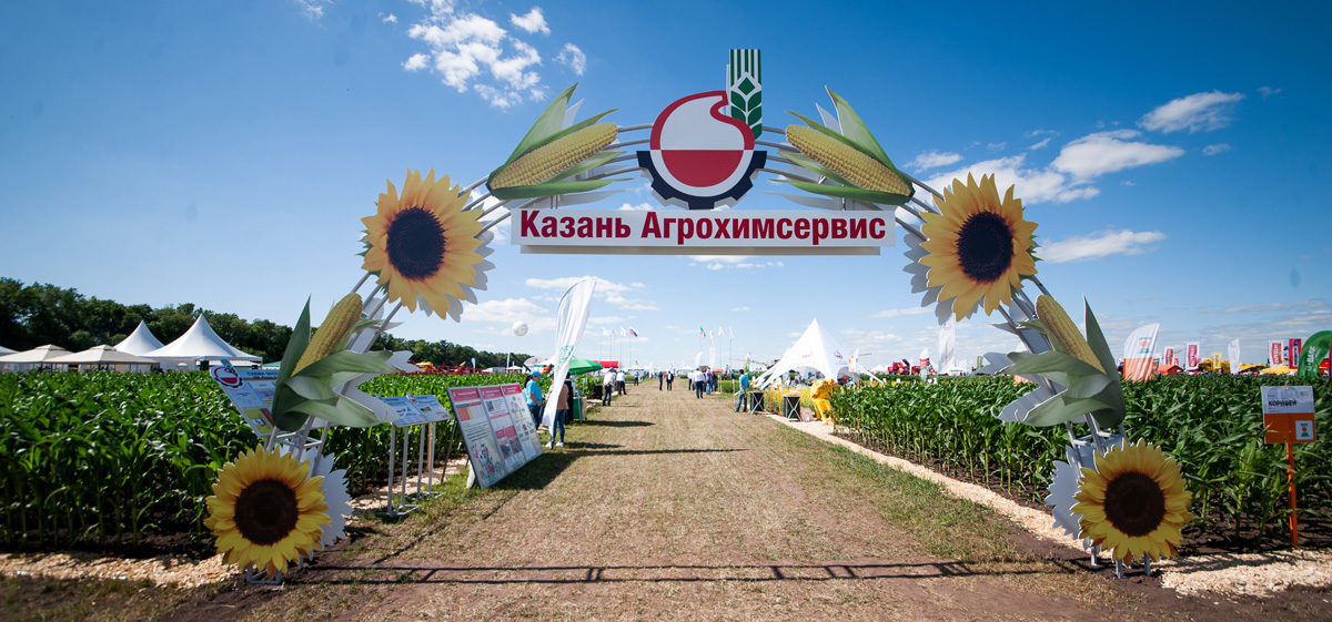 Арка_День поля
